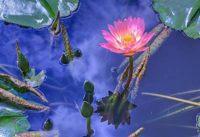 Flower 7 Poster