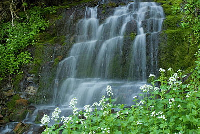 Waterfall And White Wildflowers Poster by Howie Garber