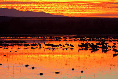 Waterfowl On Roost At Sunrise, Bosque Poster by Larry Ditto
