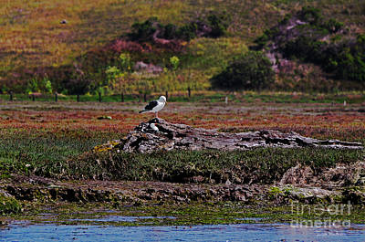 Western Gulls Nesting In A Log Poster