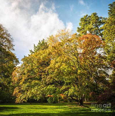 Westonbirt Arboretum Poster