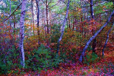 White Birch - Pocono Mountains Poster by Susan Carella