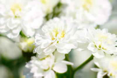 White Flower Macro Poster by Tommytechno Sweden