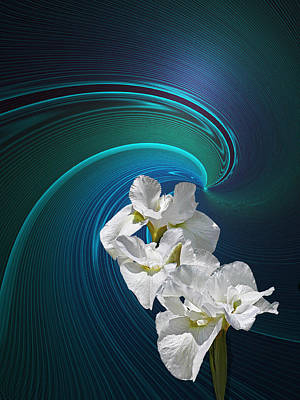 Poster featuring the photograph White Iris by Judy  Johnson