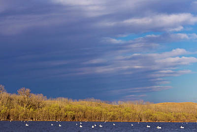 White Pelicans On Calamus Reservoir Poster by Chuck Haney