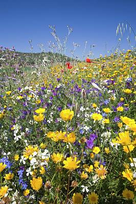 Wild Flowers Growing On A Field Verge Poster by Ashley Cooper