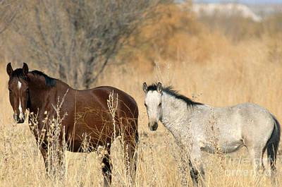 Wild Horses Amargosa Desert Nevada Poster by Mark Newman