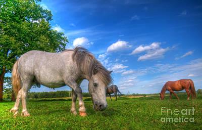 Wild Horses On The Field Poster by Michal Bednarek