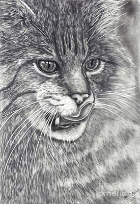 Wildcat Poster by Kerstin Schroeder