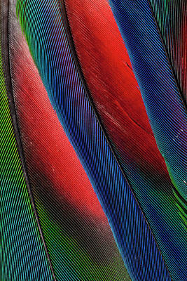 Wing Feather Design From The Amazon Poster
