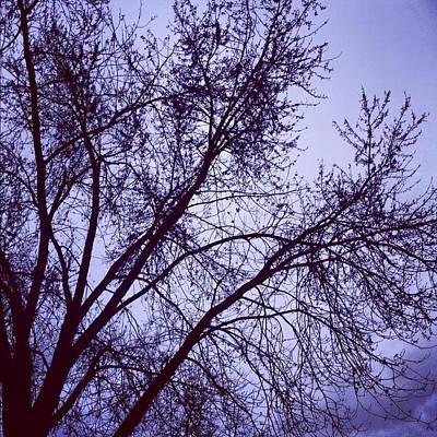 Winter Blues Poster by Toni Martsoukos