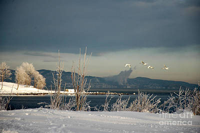 Poster featuring the photograph Winter Day by Randi Grace Nilsberg