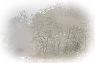 Winter Fog And Trees Poster by Thomas R Fletcher