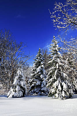Winter Forest Under Snow Poster by Elena Elisseeva
