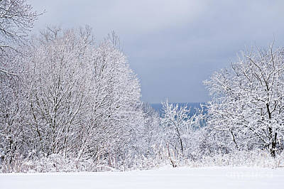 Winter Landscape Poster by Elena Elisseeva