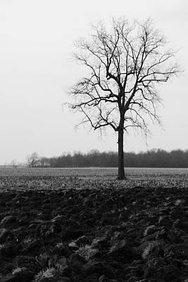 Winter Tree Poster by Daniel Kasztelan