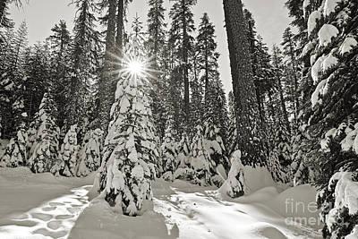 Winter Wonderland - Badger Pass In Yosemite National Park Poster by Jamie Pham