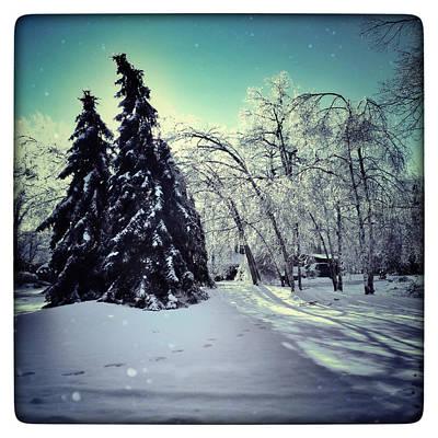 Winter Wonderland Poster by Natasha Marco