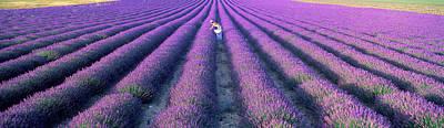 Woman Walking Through Fields Poster