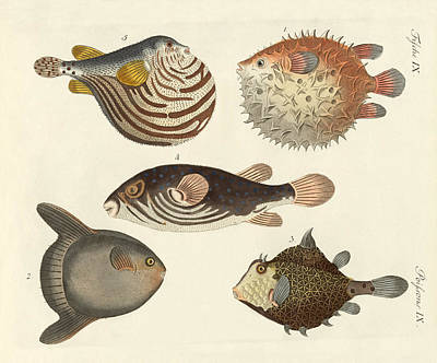 Wonderful Fish Poster by Splendid Art Prints