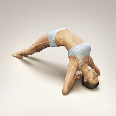 Yoga Upward Facing Two-foot Staff Pose Poster by Science Picture Co