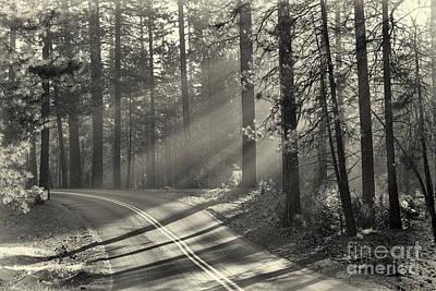 Yosemite Sunlight Poster by Jane Rix