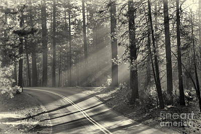 Yosemite Sunlight Poster