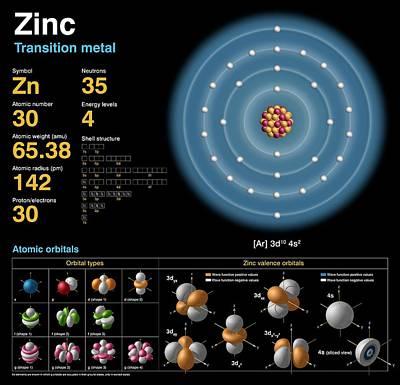 Zinc Poster by Carlos Clarivan