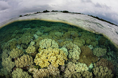 A Shallow Coral Reef Thrives Poster