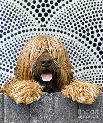 Briard Dog Poster by Jean-Michel Labat
