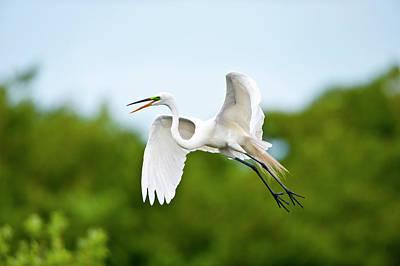 Florida, Venice, Audubon Sanctuary Poster by Bernard Friel