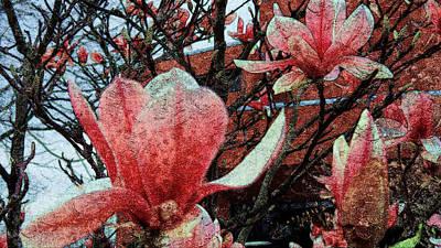 Magnolia Flowers  Poster