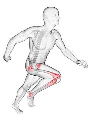 Runner's Joints Poster by Sebastian Kaulitzki