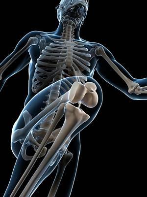 Skeletal System Of Runner Poster