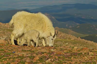 Usa, Colorado, Mount Evans Poster