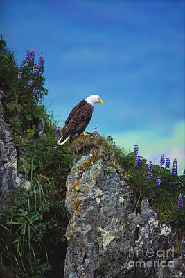 Bald Eagle Poster by Art Wolfe