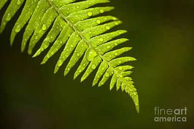 Forest Setting With Close-ups Of Ferns Poster
