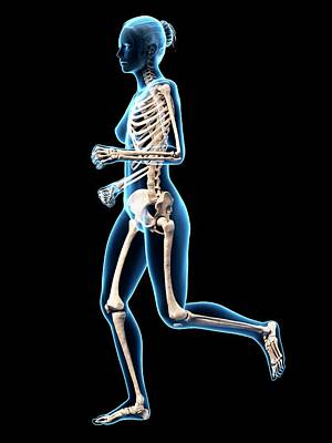 Skeletal System Of Runner Poster