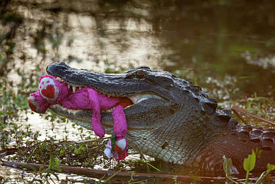 Usa, Florida, Everglades National Park Poster