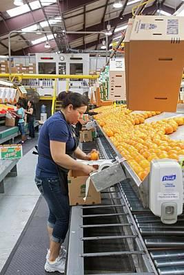 Orange Farming Poster