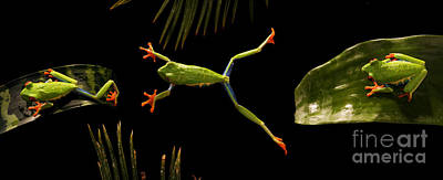 Red-eyed Tree Frog Poster by Scott Linstead
