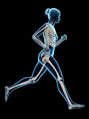 Skeletal System Of A Runner Poster