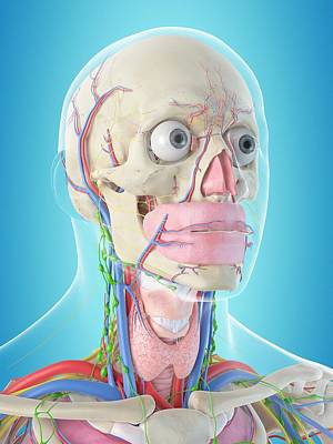 Human Anatomy Poster by Sciepro