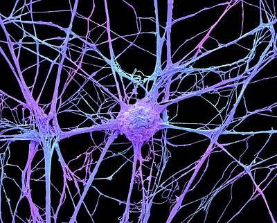 Neurone Poster by Steve Gschmeissner