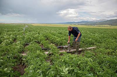 Potato Farming Poster by Jim West