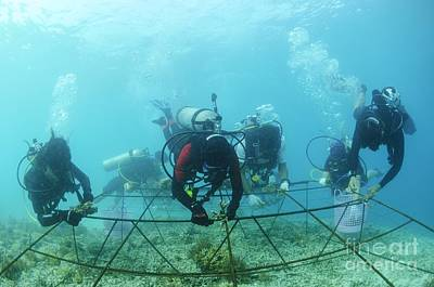Biorock Reef Restoration, Indonesia Poster by Matthew Oldfield