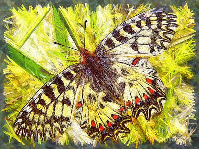 Butterfly Poster by Odon Czintos