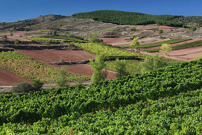 Spain, La Rioja Region, La Rioja Poster by Walter Bibikow