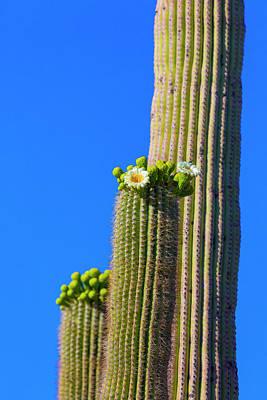 Usa, Arizona, Tucson Poster