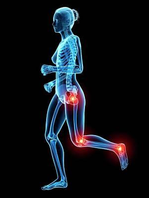 Human Skeletal System Poster